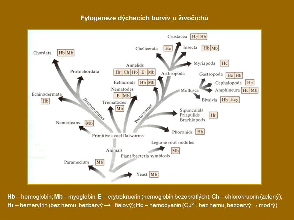 Fylogeneze dýchacích barviv u živočichů