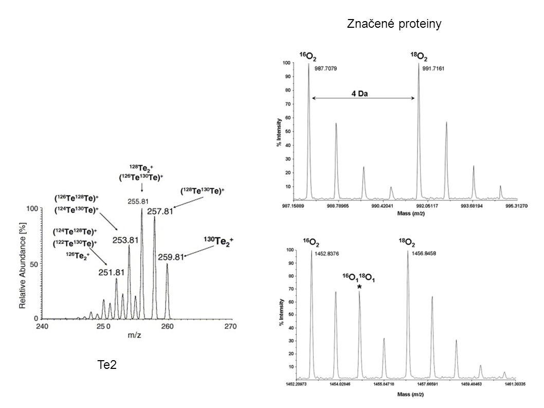 Značené proteiny Te2