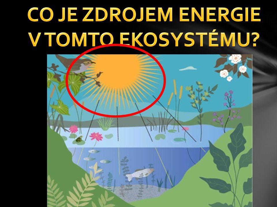 CO JE ZDROJEM ENERGIE V TOMTO EKOSYSTÉMU