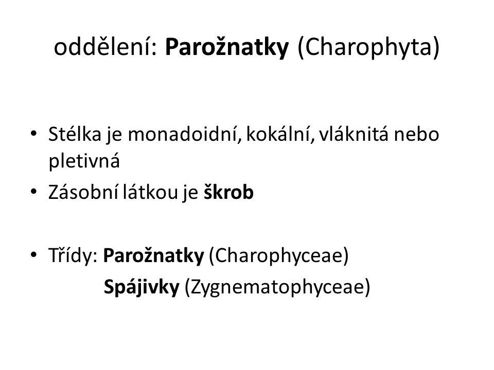 oddělení: Parožnatky (Charophyta)