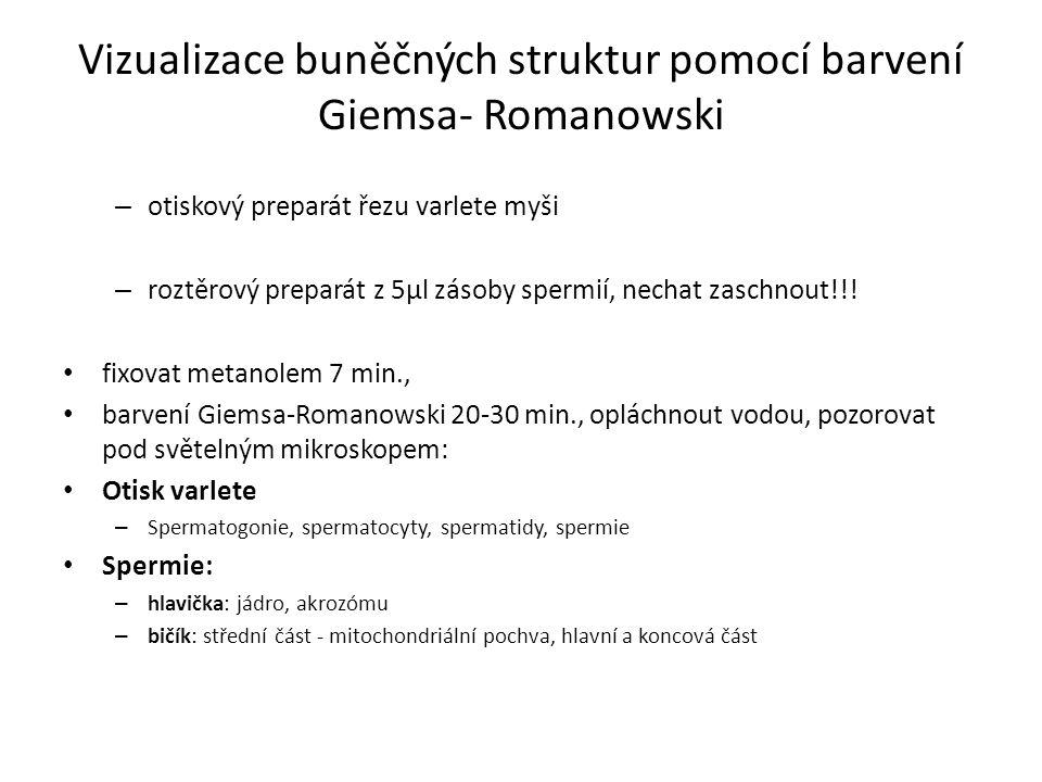 Vizualizace buněčných struktur pomocí barvení Giemsa- Romanowski