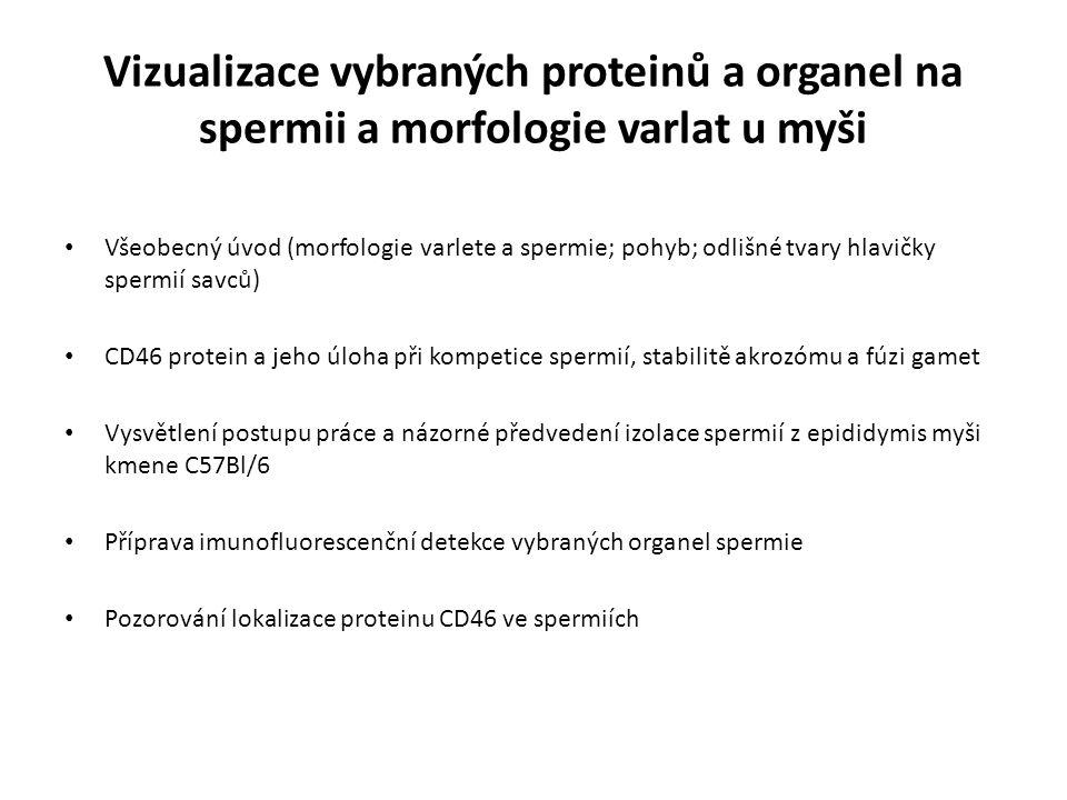 Vizualizace vybraných proteinů a organel na spermii a morfologie varlat u myši