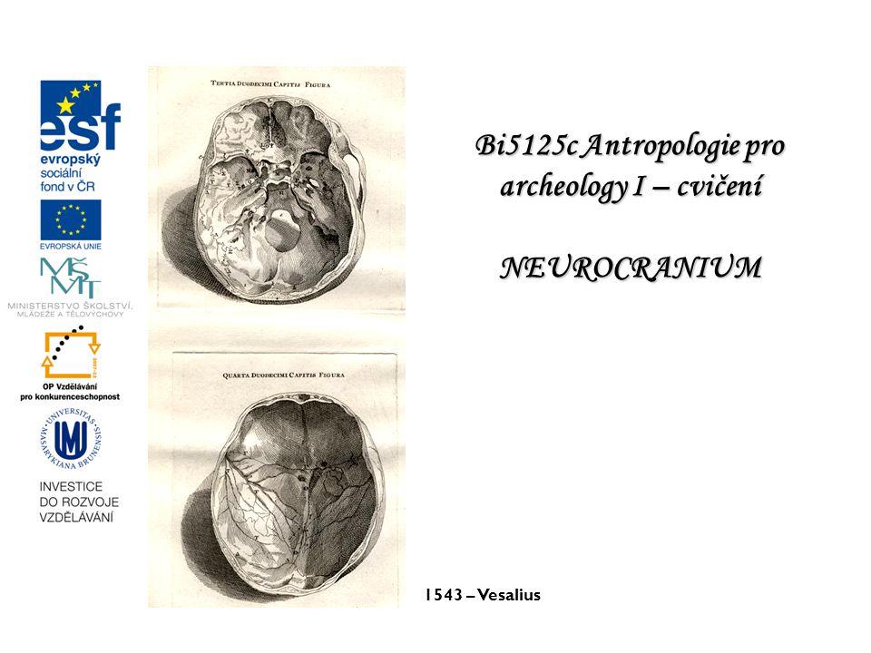 Bi5125c Antropologie pro archeology I – cvičení NEUROCRANIUM