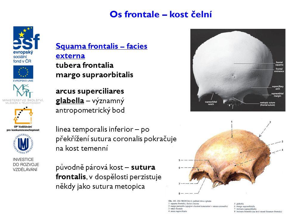 Os frontale – kost čelní