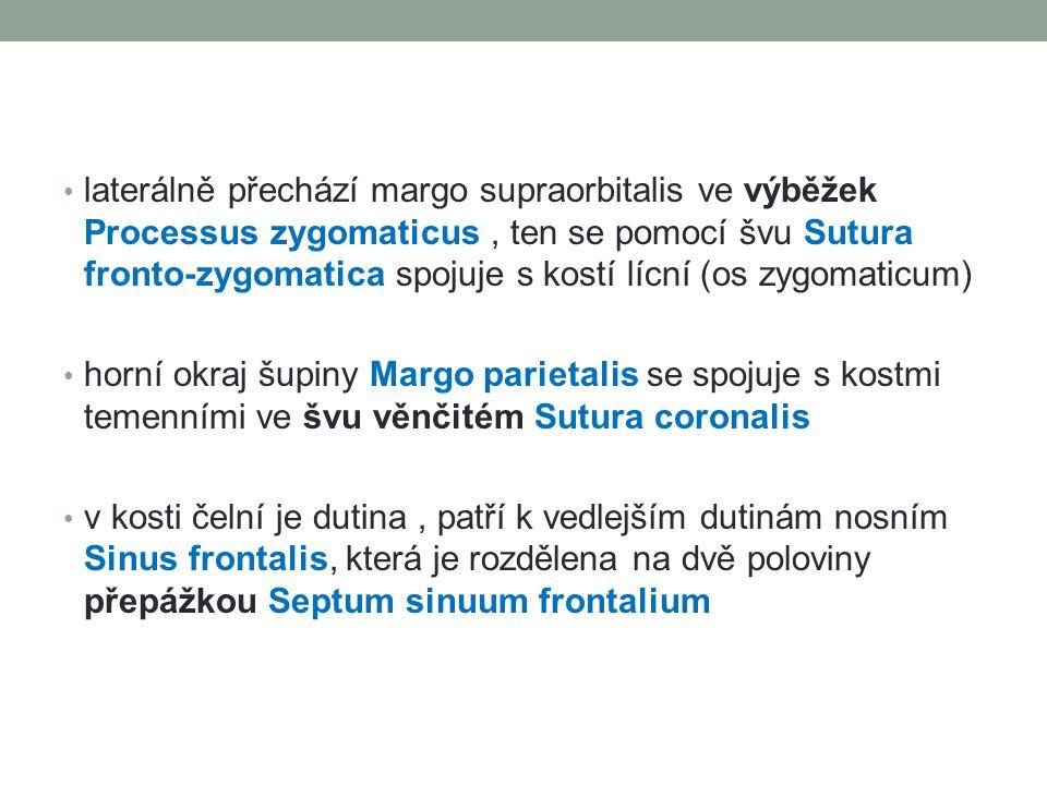 laterálně přechází margo supraorbitalis ve výběžek Processus zygomaticus , ten se pomocí švu Sutura fronto-zygomatica spojuje s kostí lícní (os zygomaticum)