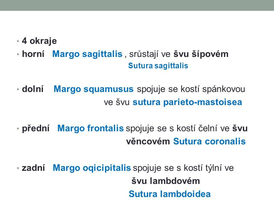 horní Margo sagittalis , srůstají ve švu šípovém