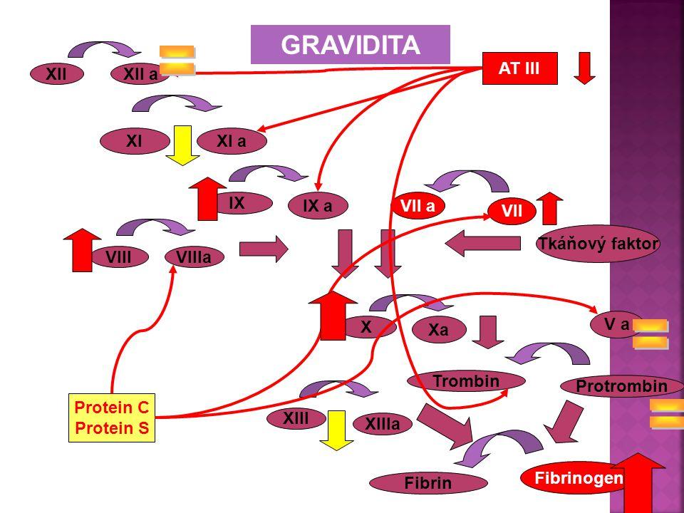 = = = GRAVIDITA AT III XII XII a XI XI a IX IX a VII a VII