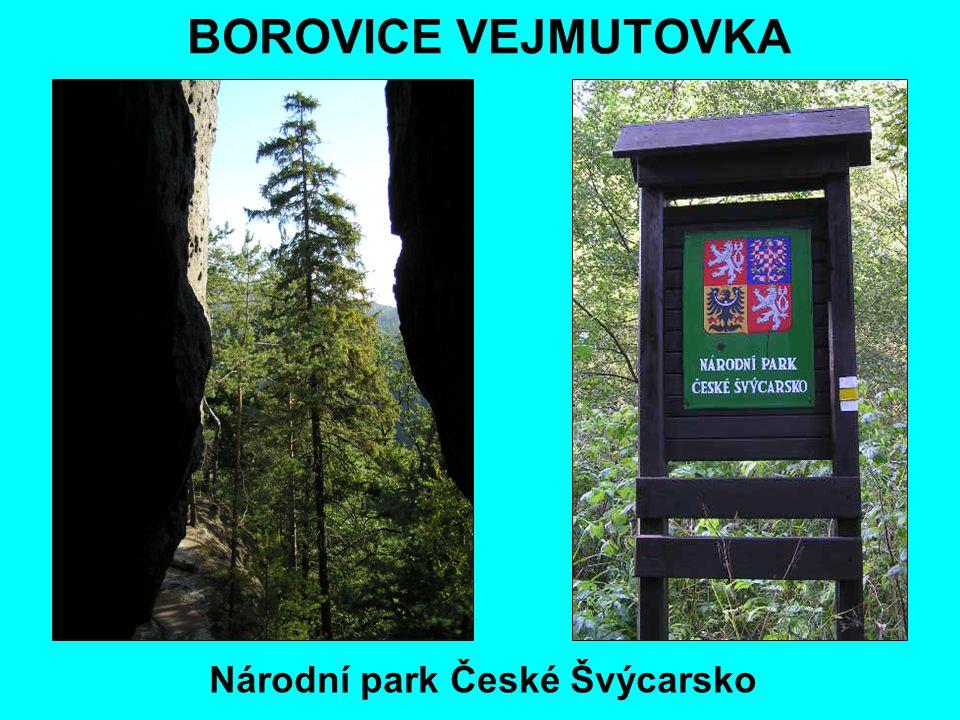 BOROVICE VEJMUTOVKA Národní park České Švýcarsko