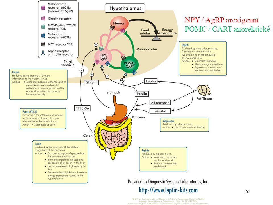 NPY / AgRP orexigenní POMC / CART anorektické