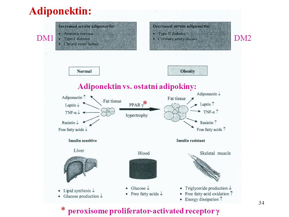 Adiponektin: * * peroxisome proliferator-activated receptor  DM1 DM2