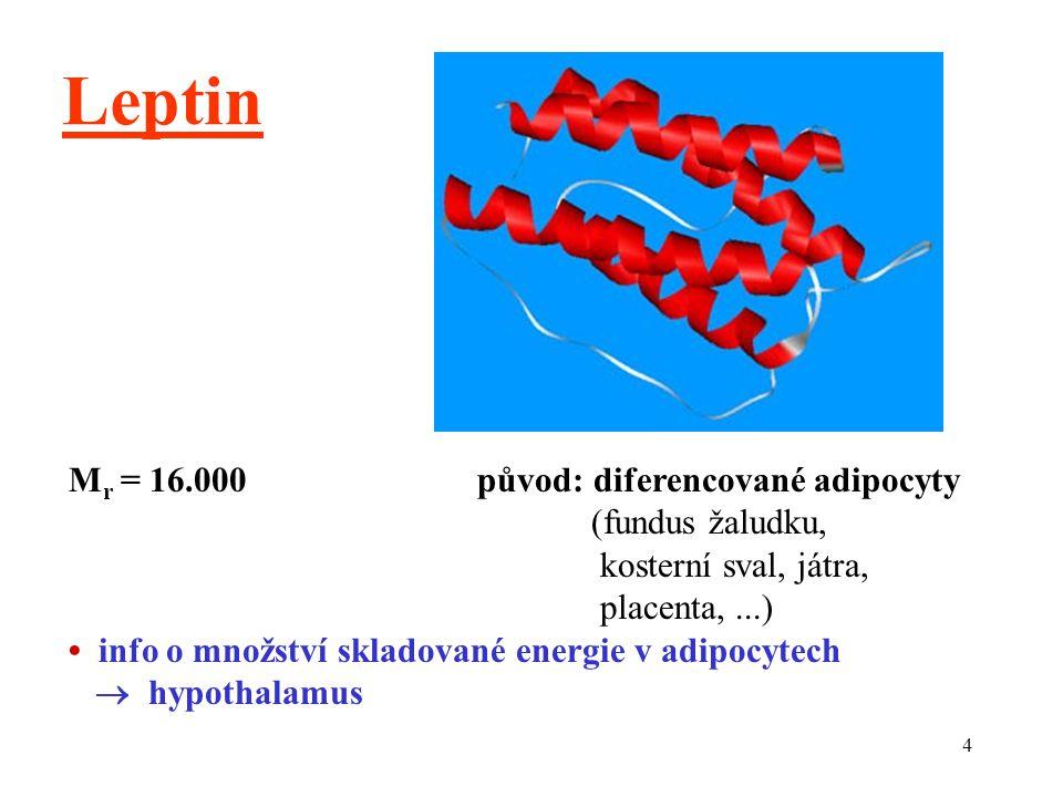 Leptin Mr = 16.000 původ: diferencované adipocyty (fundus žaludku,