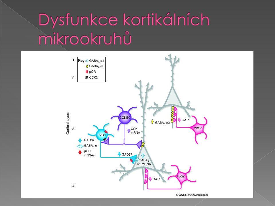 Dysfunkce kortikálních mikrookruhů