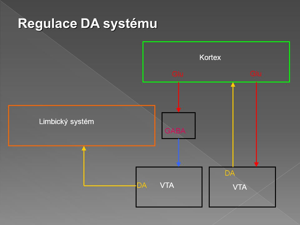 Regulace DA systému Kortex Glu Glu Limbický systém GABA DA DA VTA VTA
