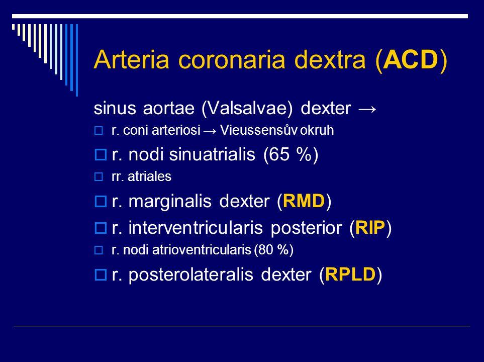 Arteria coronaria dextra (ACD)