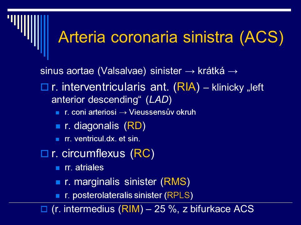 Arteria coronaria sinistra (ACS)