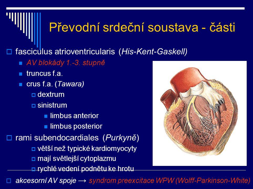 Převodní srdeční soustava - části