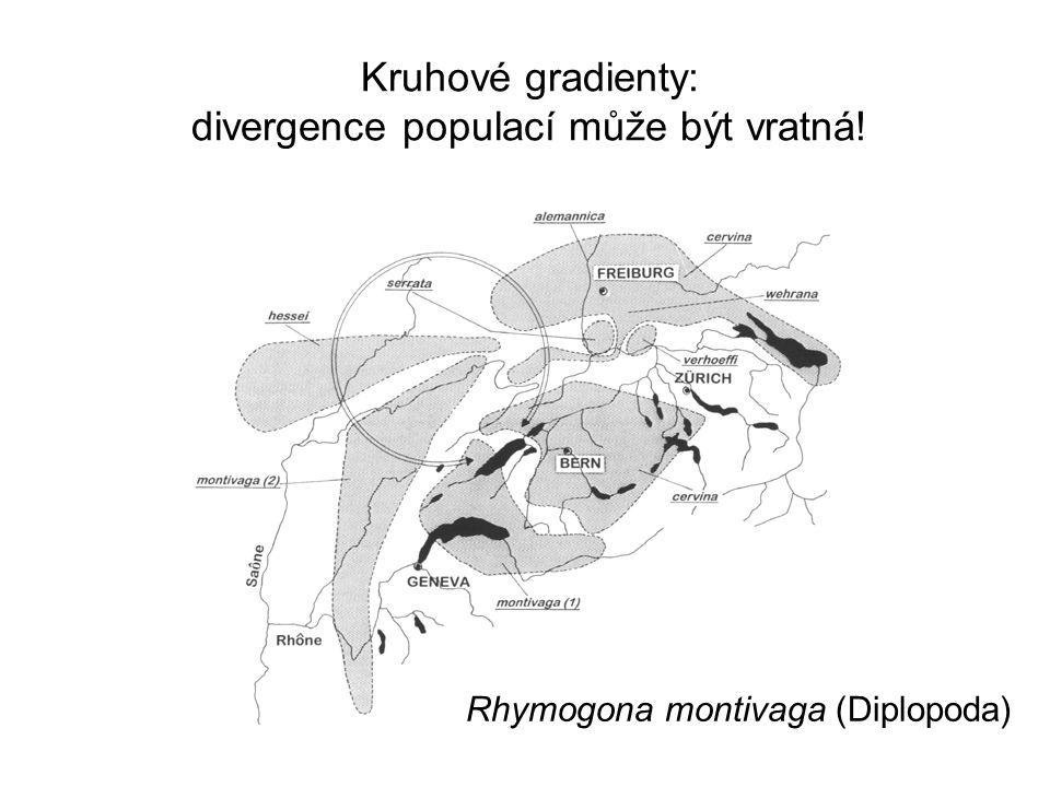 Kruhové gradienty: divergence populací může být vratná!