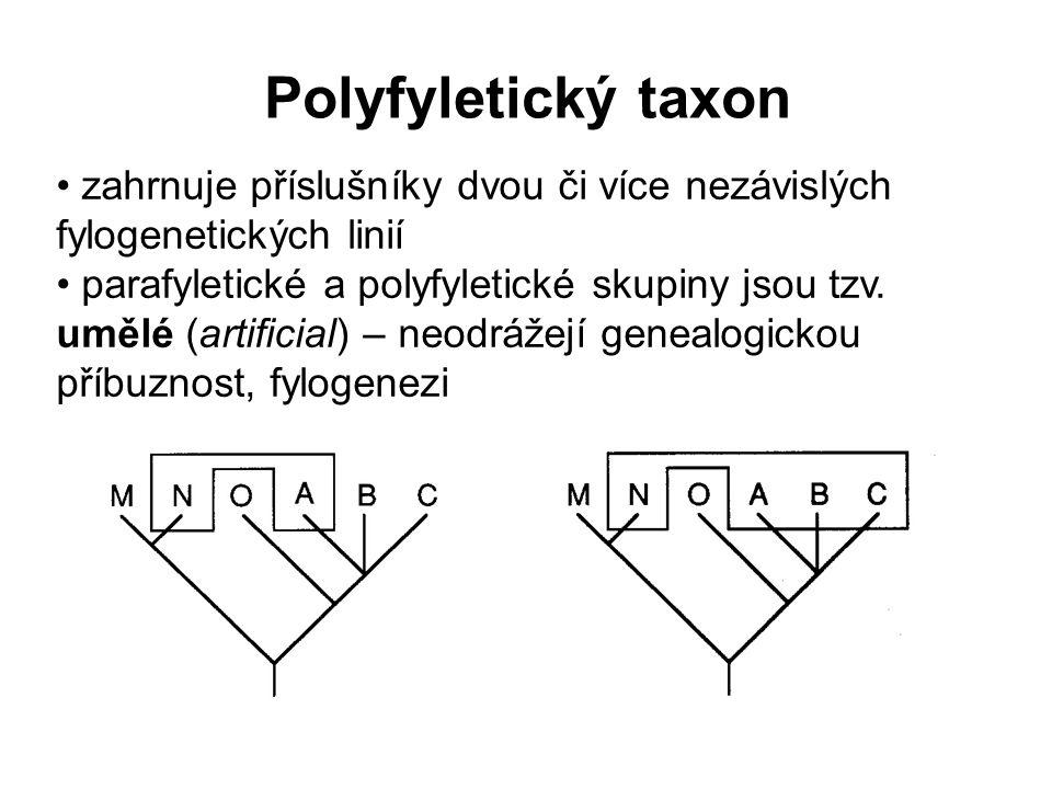 Polyfyletický taxon zahrnuje příslušníky dvou či více nezávislých fylogenetických linií.