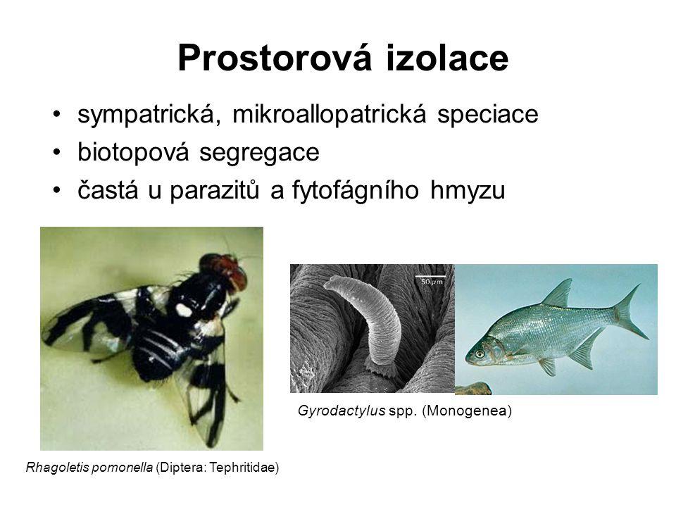Prostorová izolace sympatrická, mikroallopatrická speciace