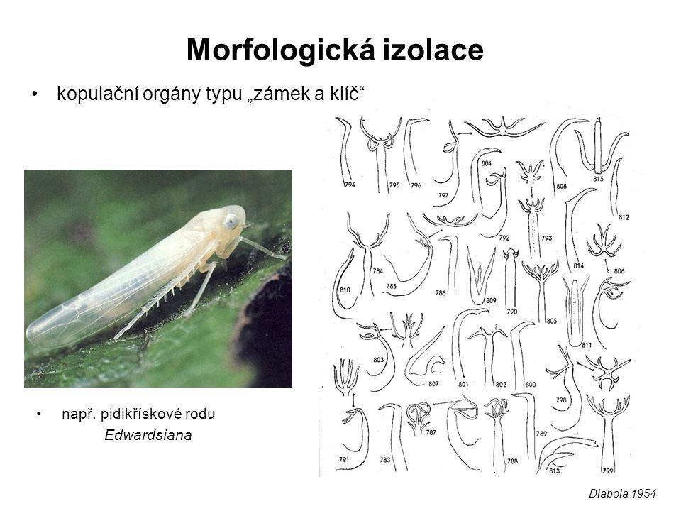 """Morfologická izolace kopulační orgány typu """"zámek a klíč"""