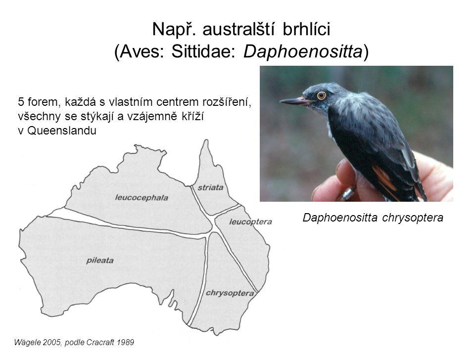 Např. australští brhlíci (Aves: Sittidae: Daphoenositta)