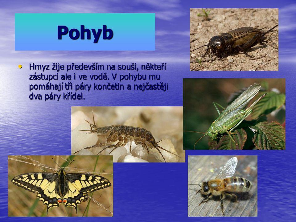 Pohyb Hmyz žije především na souši, někteří zástupci ale i ve vodě.
