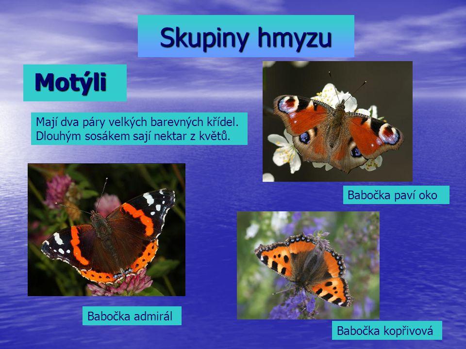 Skupiny hmyzu Motýli. Mají dva páry velkých barevných křídel. Dlouhým sosákem sají nektar z květů.
