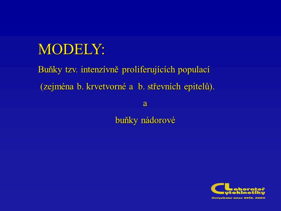 MODELY: Buňky tzv. intenzívně proliferujících populací
