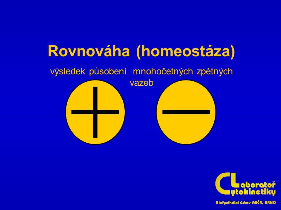Rovnováha (homeostáza)