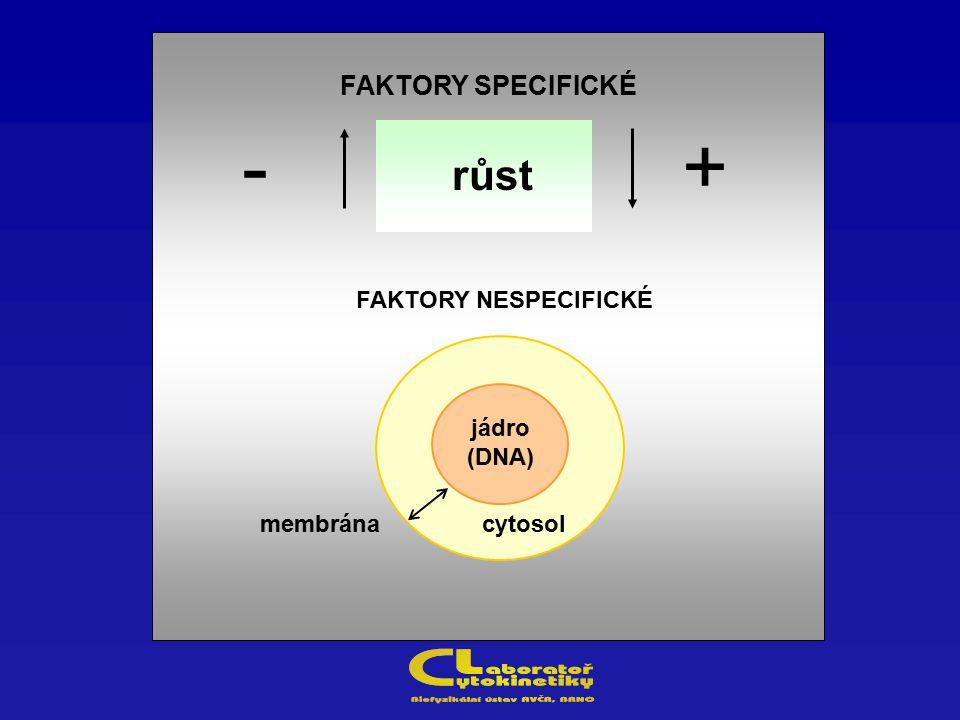 - + růst FAKTORY SPECIFICKÉ FAKTORY NESPECIFICKÉ jádro (DNA) membrána