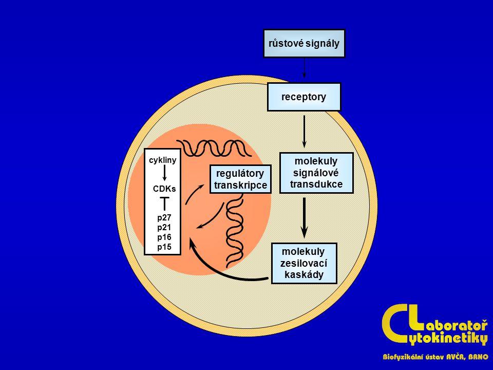růstové signály receptory molekuly signálové regulátory transdukce