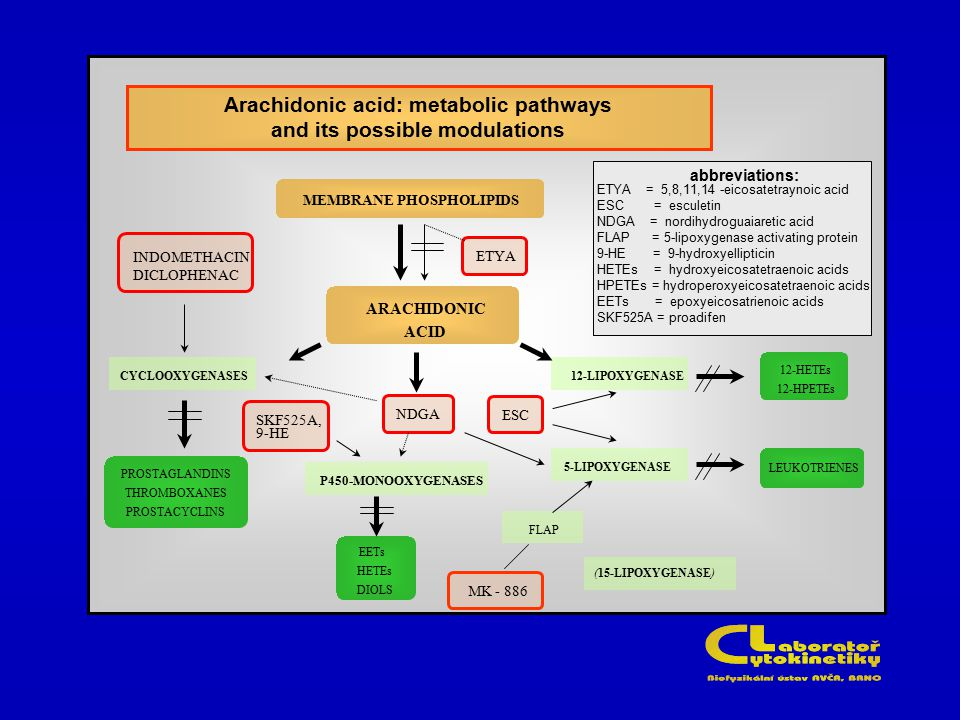 Arachidonic acid: metabolic pathways and its possible modulations