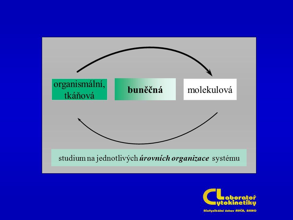 studium na jednotlivých úrovních organizace systému