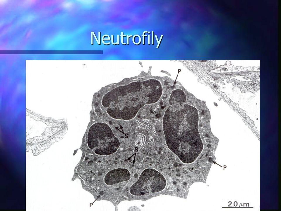 Neutrofily