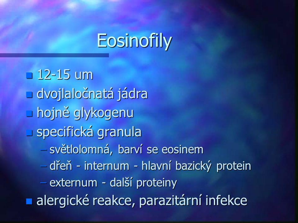 Eosinofily 12-15 um dvojlaločnatá jádra hojně glykogenu