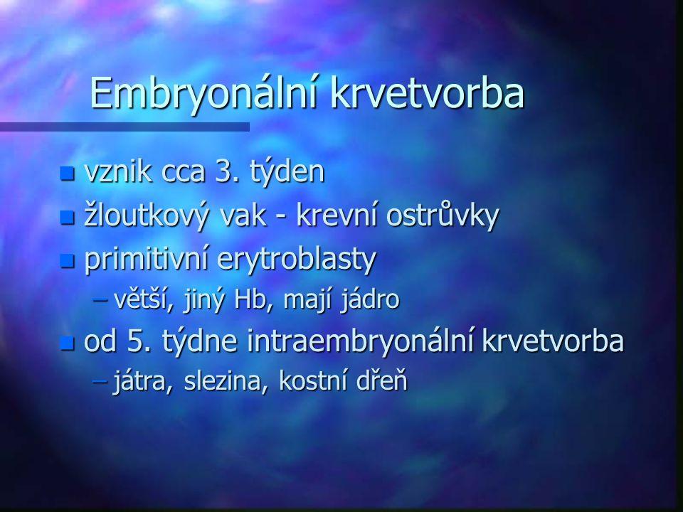 Embryonální krvetvorba