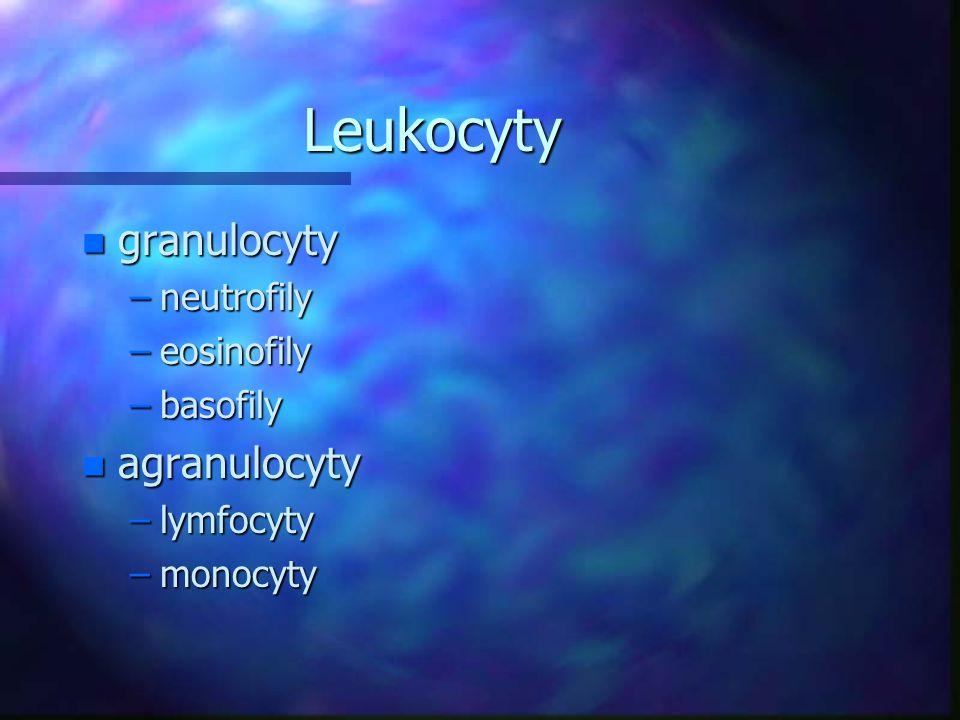 Leukocyty granulocyty agranulocyty neutrofily eosinofily basofily