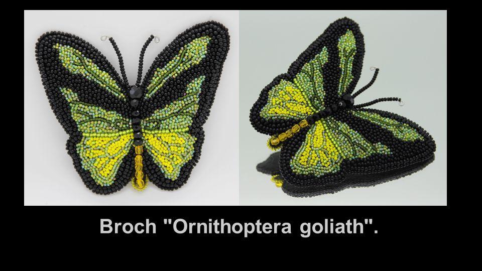 Broch Ornithoptera goliath .