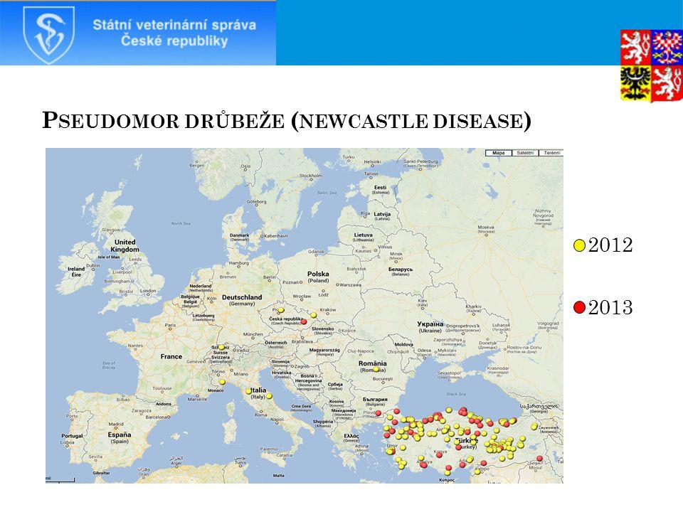 Pseudomor drůbeže (newcastle disease)