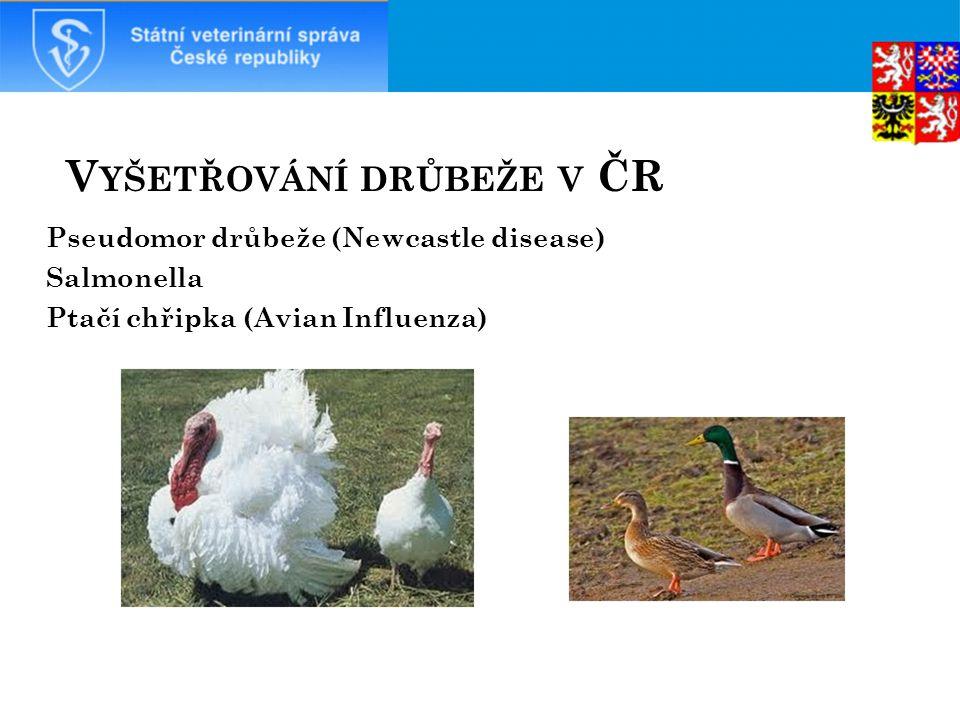 Vyšetřování drůbeže v ČR