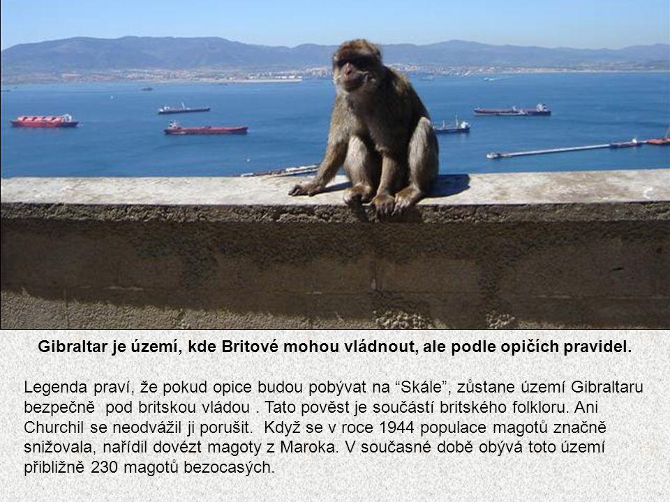 Gibraltar je území, kde Britové mohou vládnout, ale podle opičích pravidel.