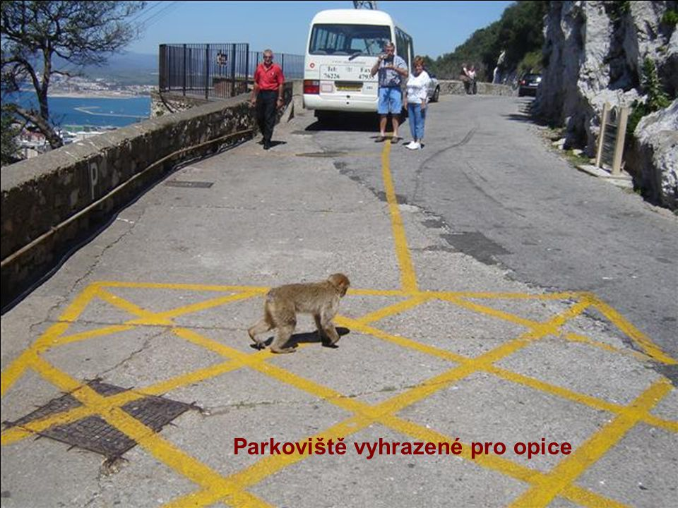 Parkoviště vyhrazené pro opice
