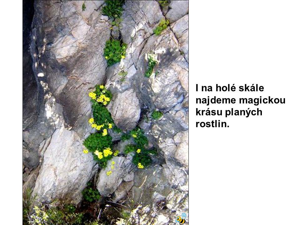I na holé skále najdeme magickou krásu planých rostlin.