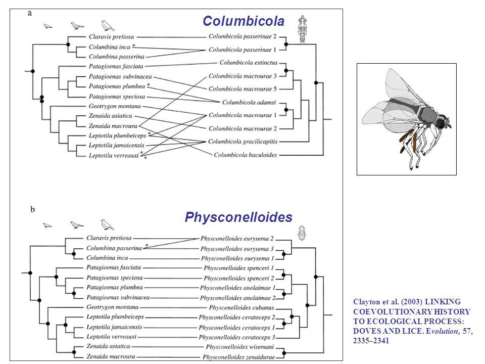 Columbicola Physconelloides