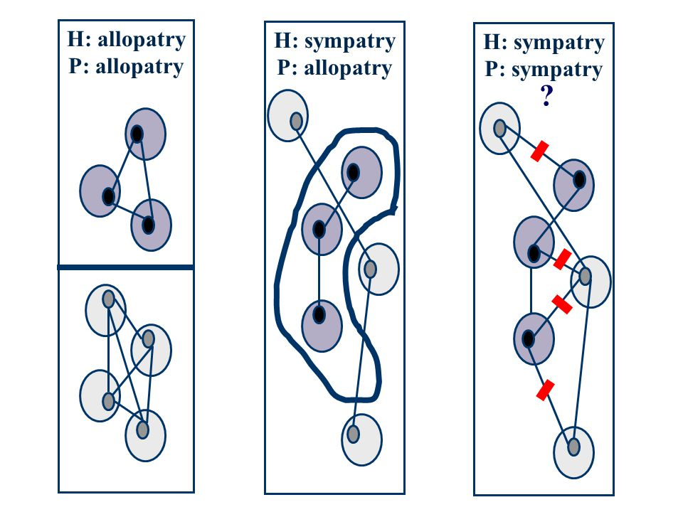 H: allopatry H: sympatry H: sympatry P: allopatry P: allopatry