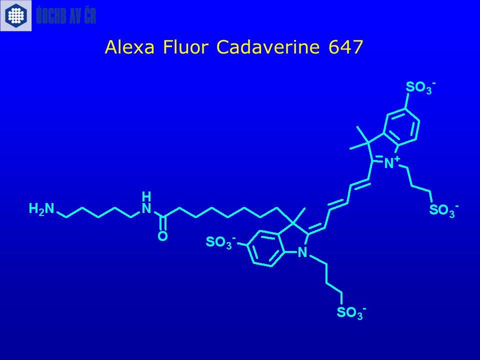 Alexa Fluor Cadaverine 647