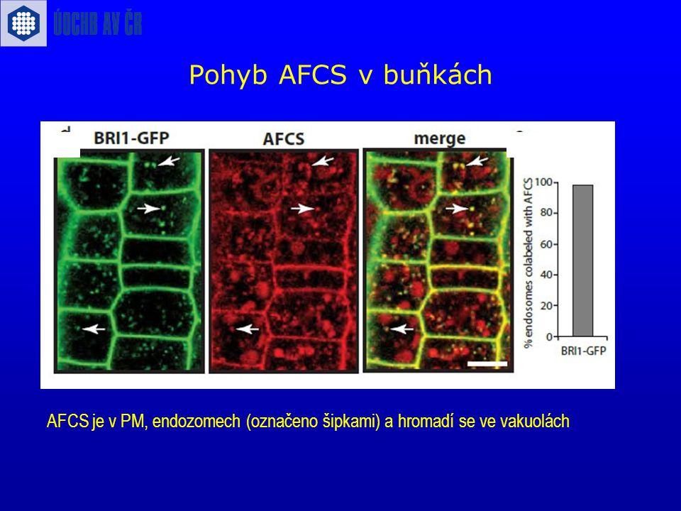 Pohyb AFCS v buňkách AFCS je v PM, endozomech (označeno šipkami) a hromadí se ve vakuolách
