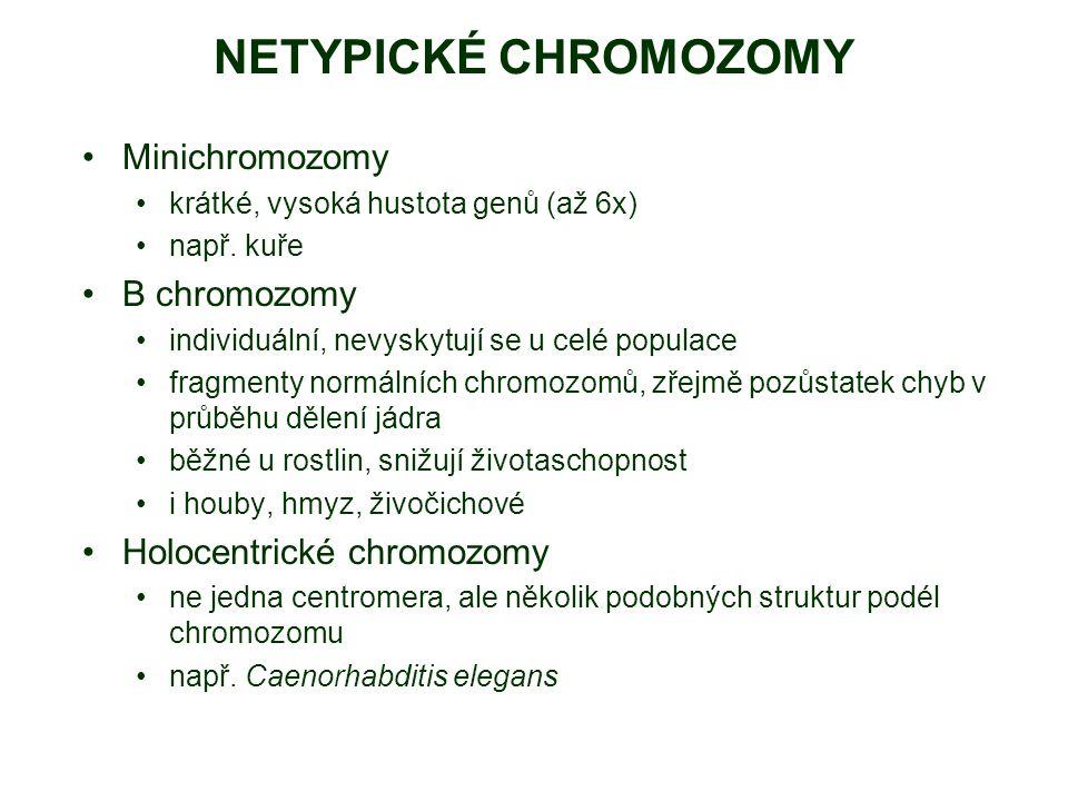 NETYPICKÉ CHROMOZOMY Minichromozomy B chromozomy