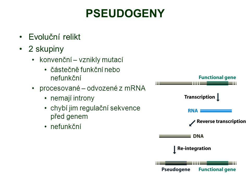 PSEUDOGENY Evoluční relikt 2 skupiny konvenční – vznikly mutací