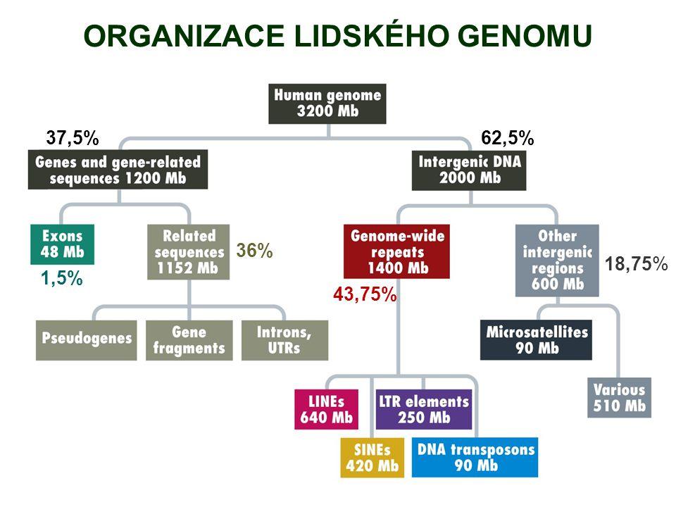 ORGANIZACE LIDSKÉHO GENOMU